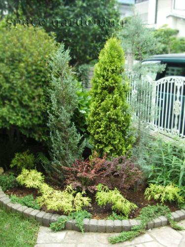 リフォームしたアイテムシンボルツリー 植栽 庭木 常緑樹 コニファー ... 庭木 コニファー